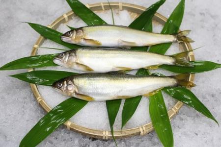 美味しい鮎を食べてから目指すべき養殖が始まった